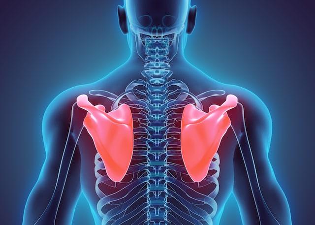 肩甲骨は肋骨にくっついて動きが悪くなっていることが多いですが、楽に動けるように筋肉をリリースしていきます。